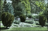 view [King Garden]: flower beds and borders adorned by irises and evergreens. digital asset: [King Garden]: flower beds and borders adorned by irises and evergreens.: [between 1914 and 1949?]