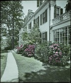 view [MacCutcheon Garden]: flowering shrubs and walkway in front of the house. digital asset: [MacCutcheon Garden]: flowering shrubs and walkway in front of the house.: [between 1914 and 1949?]