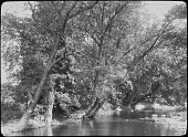 view [Miscellaneous Sites near Summit, New Jersey]: trees along a riverbank in summer. digital asset: [Miscellaneous Sites near Summit, New Jersey]: trees along a riverbank in summer.: [between 1914 and 1949]