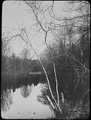 view [Miscellaneous Sites near Summit, New Jersey]: trees by the river in autumn. digital asset: [Miscellaneous Sites near Summit, New Jersey]: trees by the river in autumn.: [between 1914 and 1949]