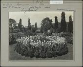 view Oldacres digital asset: Oldacres [photoprint]