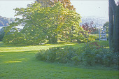 view [Nethermuir]: rolling lawn with cork tree in background and metal sculpture at right. digital asset: [Nethermuir]: rolling lawn with cork tree in background and metal sculpture at right.: 2005.