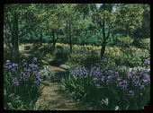 view [Willowmere]: the iris walk. digital asset: [Willowmere]: the iris walk.: [1914]