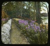 view [Willowmere]: the iris walk. digital asset: [Willowmere] [lantern slide] the iris walk.