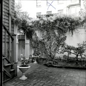 view [Broughton Garden]: garden view, with wall and adjacent buildings. digital asset: [Broughton Garden] [photographic print]: garden view, with wall and adjacent buildings.