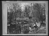 view Central Park: a small pond in a wooded area. digital asset: Central Park [glass negative]: a small pond in a wooded area.
