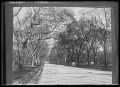 view Central Park: a broad walkway lined with benches. digital asset: Central Park [glass negative]: a broad walkway lined with benches.