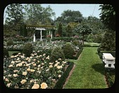 view Unidentified Garden in Glen Cove, New York: Rose garden digital asset: Unidentified Garden in Glen Cove, New York [slide]