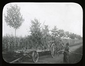 view Hicks Nurseries: tree mover. digital asset: Hicks Nurseries [slide]: tree mover.