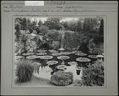 view [Sonnenberg Gardens]: lily pond in the Japanese garden digital asset: [Sonnenberg Gardens] [photographic print]: lily pond in the Japanese garden.