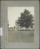 view Thompson Garden: Populus suaveolens, Japanese poplar moved by Hicks Nurseries digital asset: Thompson Garden [photoprint]