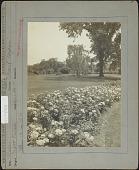 """view Pratt Garden: Roses, """"Paul Negron"""" digital asset: Pratt Garden [photoprint]"""