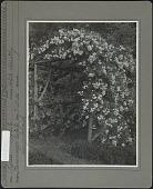 view Havemeyer Garden digital asset: Havemeyer Garden [photoprint]