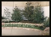 view New York Flower Show digital asset: New York Flower Show: 03/00/1947