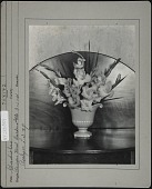view Stassen Floral Gardens, Inc. digital asset: Stassen Floral Gardens, Inc. [photoprint]