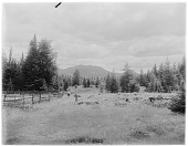 view [Miscellaneous Sites in the Adirondack Mountains]: view from near Saranac Lake looking toward Mt. McKenzie (center) and partially obscured Haystack Mountain (right). digital asset: [Miscellaneous Sites in the Adirondack Mountains] [glass negative]: view from near Saranac Lake looking toward Mt. McKenzie (center) and partially obscured Haystack Mountain (right).