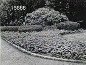 view Untitled Garden in Munsey Park, NY digital asset: Untitled Garden in Munsey Park, NY [slide]