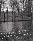 view [Brookside]: looking across pond to rocky hillside with naturalized daffodils. digital asset: [Brookside] [photonegative]: looking across pond to rocky hillside with naturalized daffodils.