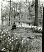 view [Brookside]: woman sitting by pond bank amidst naturalized  daffodils. digital asset: [Brookside]: woman sitting by pond bank amidst naturalized  daffodils.