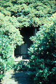 "view [Oak Knoll]: a hidden lion's ""mask"" wall fountain in one of the terrace gardens. digital asset: [Oak Knoll]: a hidden lion's ""mask"" wall fountain in one of the terrace gardens.: 1984 Sep."