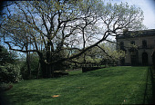 view [Oak Knoll]: the old oak, which has lived on the site since the late 18th century. digital asset: [Oak Knoll]: the old oak, which has lived on the site since the late 18th century.: 2007 May.