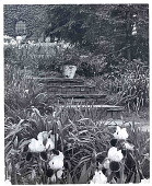 view [Kenneth D. Smith Gardens]: iris-bordered brick and bluestone steps leading down from house to garden area. digital asset: [Kenneth D. Smith Gardens] [photoprint]: iris-bordered brick and bluestone steps leading down from house to garden area.