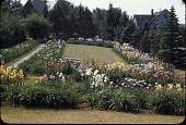 view [Kenneth D. Smith Gardens]: rectangle lily garden. digital asset: [Kenneth D. Smith Gardens]: rectangle lily garden.: [1954?]