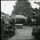 view [Feil Garden]: upper terrace at back of house, with large sugar maple in background. digital asset: [Feil Garden] [photographic print]: upper terrace at back of house, with large sugar maple in background.