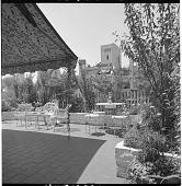 view [Gaines Garden]: view of garden. digital asset: [Gaines Garden] [contact print and safety film negative]: view of garden.