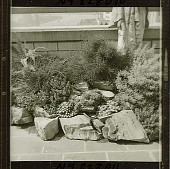 view [Young Garden]: detail of rock garden. digital asset: [Young Garden] [safety film negative and photographic print]: detail of rock garden.