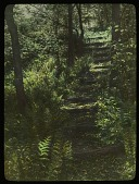 view [Ferncote]: earthen stairs lead through woodlands. digital asset: [Ferncote]: earthen stairs lead through woodlands.: [1930?]