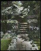 view [Ferncote]: stone path and stairs with tulips and flower edging. digital asset: [Ferncote]: stone path and stairs with tulips and flower edging.: [1930?]