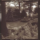 view [Unidentified Garden in Armonk, New York, No. 2]: looking from fern area toward borders and wooded perimeter. digital asset: [Unidentified Garden in Armonk, New York, No. 2] [photonegative]: looking from fern area toward borders and wooded perimeter.