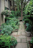 view [A Small City Garden in the Circle at Fairhill Village]: front garden path from south to north. digital asset: [A Small City Garden in the Circle at Fairhill Village]: front garden path from south to north.: 1999 May.