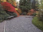 view [The Jane K. Platt Garden]: evergreen garden. digital asset: [The Jane K. Platt Garden]: evergreen garden.: ca. 1980