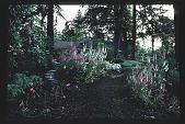 view [Stubblefield Garden]: facing east toward house from informal path. digital asset: [Stubblefield Garden]: facing east toward house from informal path.: 1995 May.