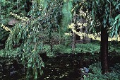 view [Vollum Garden]: view of pond and trees. digital asset: [Vollum Garden]: view of pond and trees.: 1996.