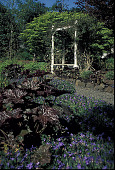 view [Blessings]: looking west towards the arbor that supports a climbing rose as well as wisteria. digital asset: [Blessings]: looking west towards the arbor that supports a climbing rose as well as wisteria.: 2001 May.