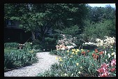view [Boxly]: gravel walk and spring flowers. digital asset: [Boxly]: gravel walk and spring flowers.: 1972 May.