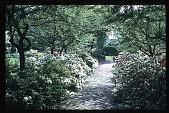 view [Boxly]: azaleas. digital asset: [Boxly]: azaleas.: 1972 May.