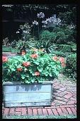 view [Boxly]: planters. digital asset: [Boxly]: planters.: 1979 Jun.