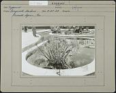 view [Longwood Gardens] digital asset: [Longwood Gardens] [photoprint]