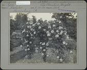 view Haehulen Garden digital asset: Haehulen Garden [photoprint]