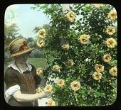 view [Breeze Hill]: Woman with yellow roses (climbing Emily Gray). digital asset: [Breeze Hill] [lantern slide]: Woman with yellow roses (climbing Emily Gray).