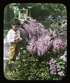view [Breeze Hill]: boy looking at flowers. digital asset: [Breeze Hill] [lantern slide]: boy looking at flowers.