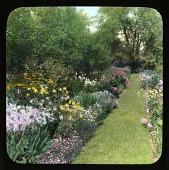 view [Breeze Hill]: garden walkway; flowerbed. digital asset: [Breeze Hill] [lantern slide]: garden walkway; flowerbed.