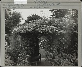 view [Breeze Hill]: Rose (Bess Lovett) arbor with bench. digital asset: [Breeze Hill] [photographic print]: Rose (Bess Lovett) arbor with bench.
