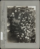 view [Breeze Hill]: Arbor with climbing roses (Mary Wallace). digital asset: [Breeze Hill] [photographic print]: Arbor with climbing roses (Mary Wallace).