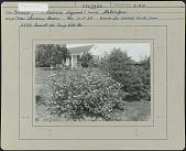 view Boon Garden digital asset: Boon Garden [photoprint]