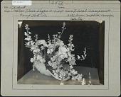 view Pealer's Flower Shop digital asset: Pealer's Flower Shop [photoprint]